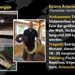 Beschreibung Reptilienzoo